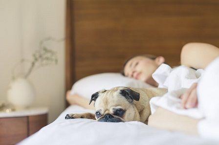 vyčerpání organismu - spánek
