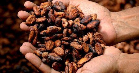 Dietní jídla - kakao