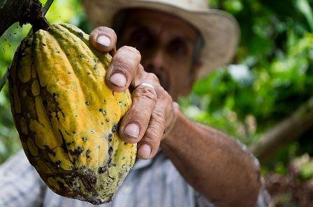 Zlepšení erekce - RAW kakao