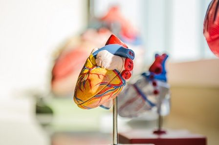 muži po padesátce - problémy se srdcem